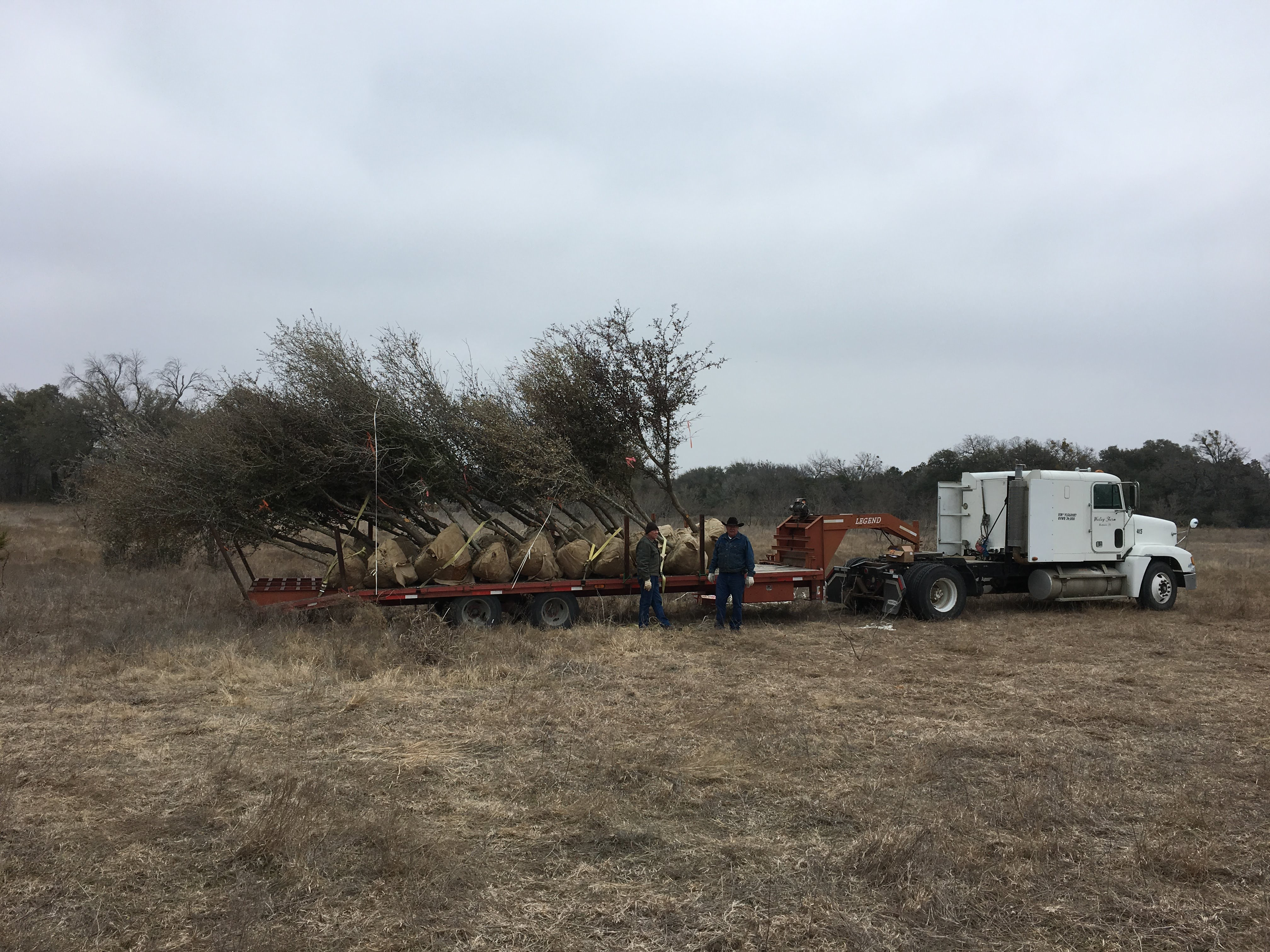 Trees loaded on trailer