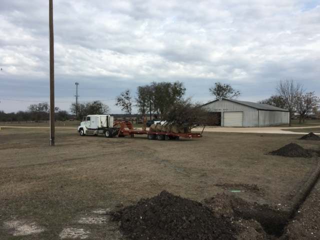 Unloading trees